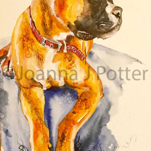 Boxer Dog watercolour