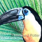 Toucan watercolour